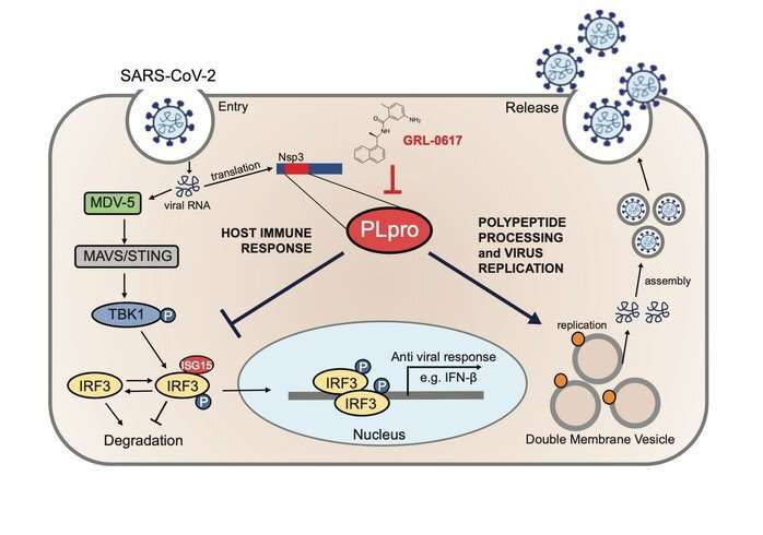 COVID-19: Anti-viral strategy with double effect