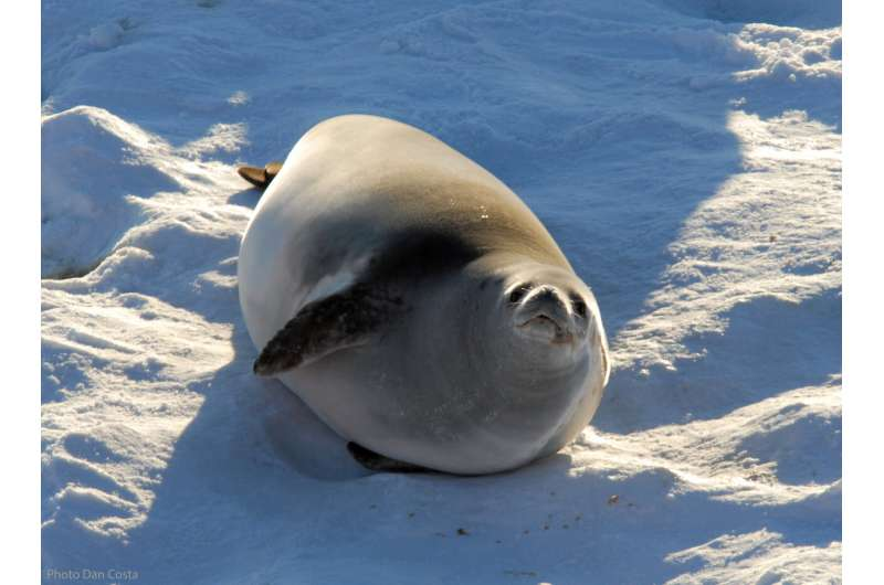 Crabeater seal data used to predict changes in Antarctic krill distribution