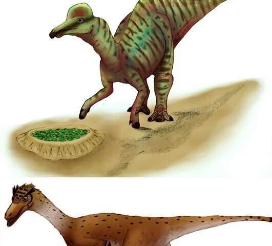 Cracking the secrets of dinosaur eggshells