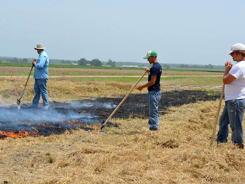Crop residue decisions affect soil life