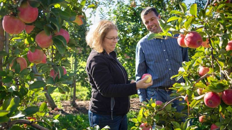 'Crunchy, complex': Three new apples released