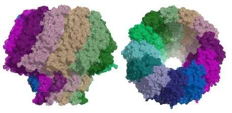 Cryo-EM opens a door to fight Epstein-Barr