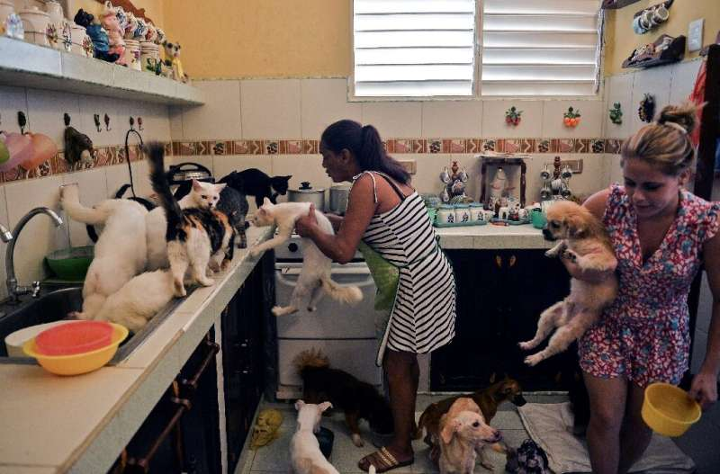 Cuban Noris Perez and her daughter feed cats and dogs at a private animal shelter in Havana—Cuba will soon pass its first law to