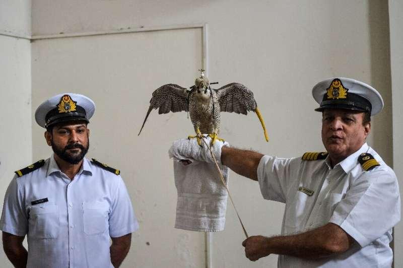 Customs officials seized 75 falcons and a houbara bustard at locations around Karachi