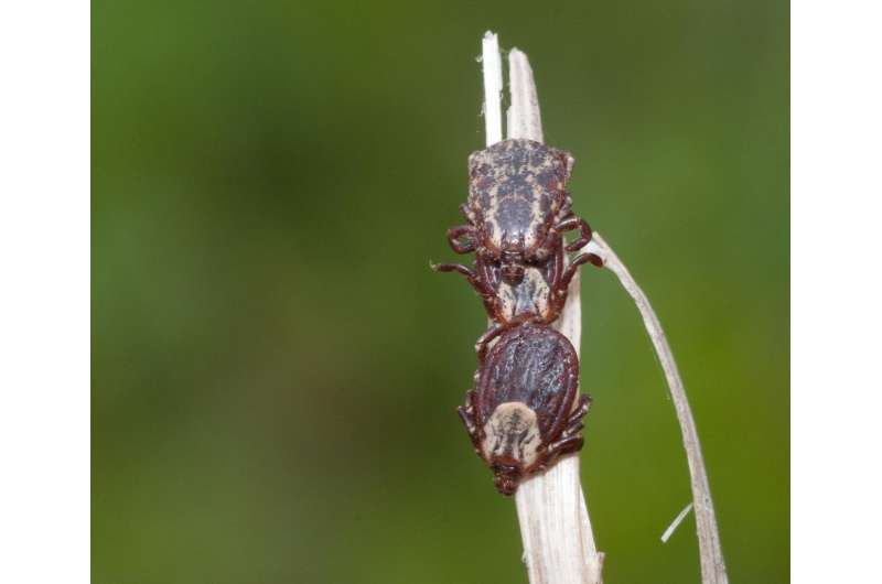 Dangerous tick-borne bacterium extremely rare in New Jersey