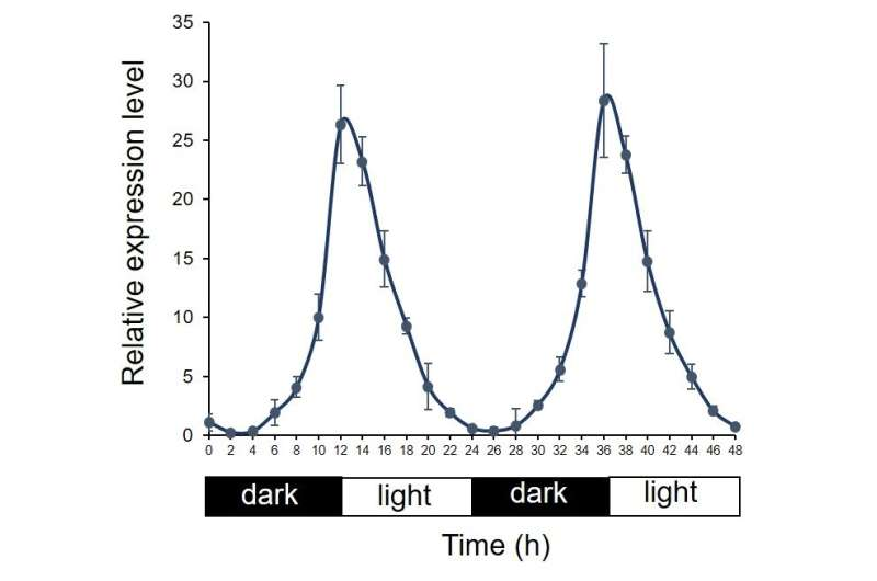 """Day in, day out: Targeting the daily magnesium """"rhythm"""" can optimize crop yield"""