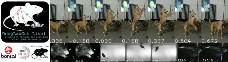 DeepLabCut-Live! real-time marker-less motion capture for animals