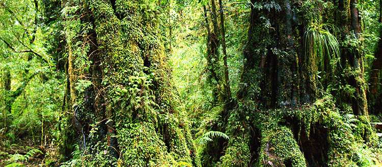 Defining which types of forests can store the most carbon and under what conditions