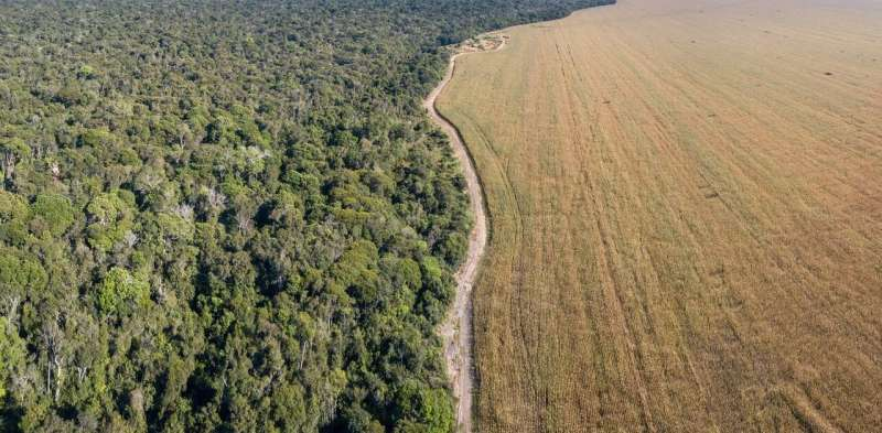 Demand for meat is driving deforestation in Brazil – changing the soy industry could stop it