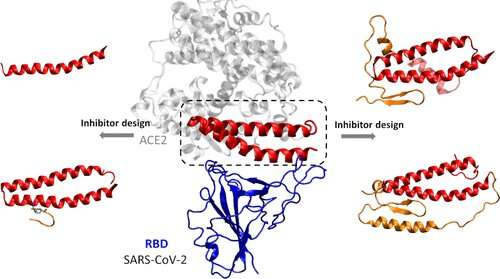 Designing peptide inhibitors for possible COVID-19 treatments