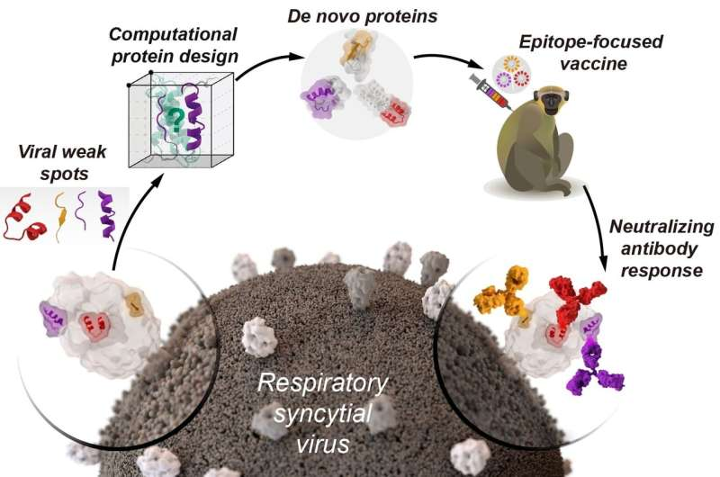 Designing vaccines from artificial proteins