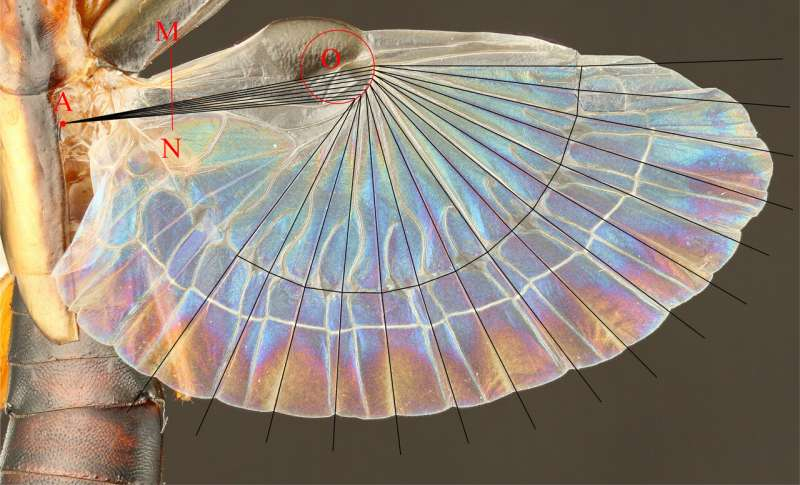 Design of insect-inspired fans offers wide-ranging applications