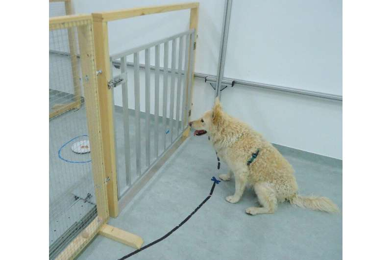 Diet and prior training show no impact on cognitive decline in aging pet dogs