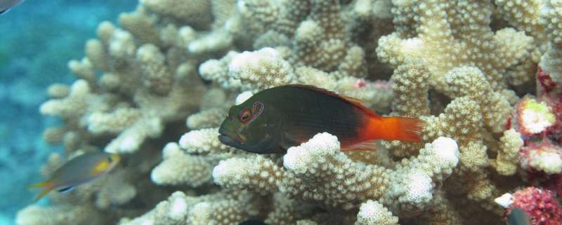 Diet diversity: Hawkfish species coexist on coral reefs thanks to differing food preferences