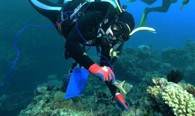 Difficult, complex decisions underpin the future of the world's coral reefs