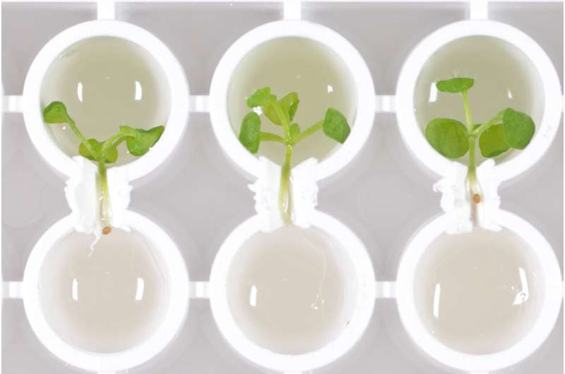 Discovered a small protein that synchronizes the circadian clocks in shoots and roots