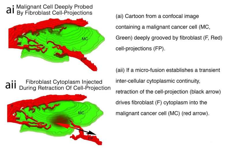 Discovery that cells inject each other opens new line of attack on cancer