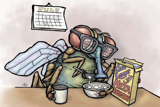Dissecting fruit flies' varying responses to life-extension diet