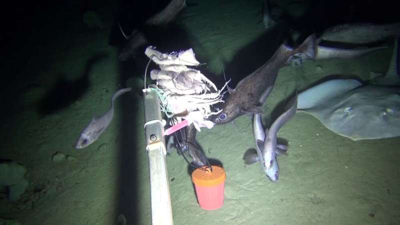 DNA in seawater can reveal fish diversity in the deep ocean