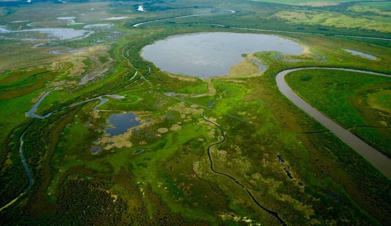 DNA metabarcoding reveals metacommunity dynamics in a threatened boreal wetland