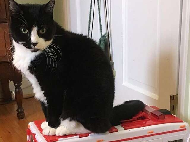 Does your cat have degenerative joint disease?