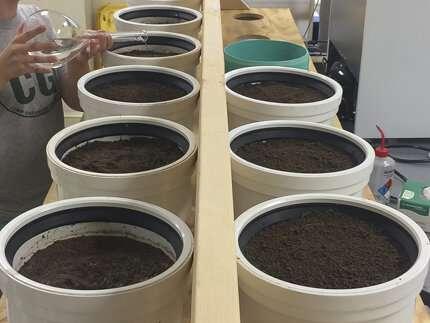 Do soils need a low-salt diet?