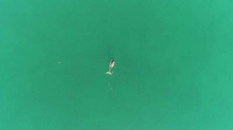 Drones driving community conservation of the dugong