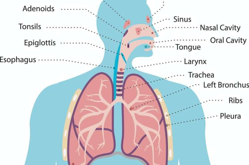 Dry, wet, barking, hacking: a guide to coughs in the time of coronavirus