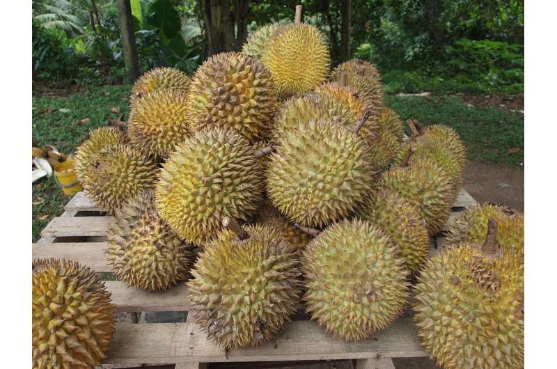 Durian skin biocomposite for take-out containers and 3-D printing