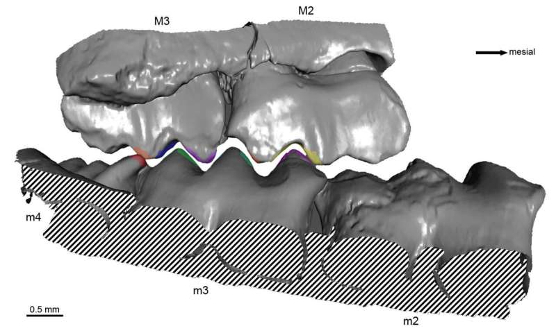 Early mammal with remarkably precise bite