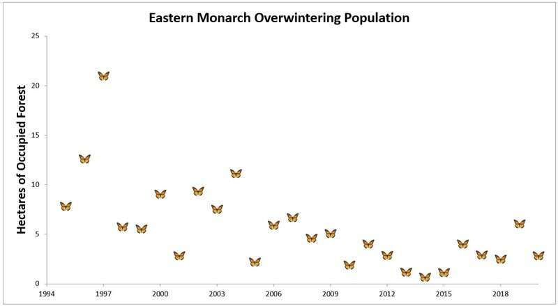 Eastern Monarch Butterfly Population Plunges by More Than Half