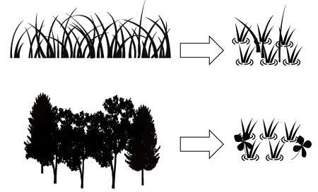 Echo from the past makes rice paddies a good home for wetland plants