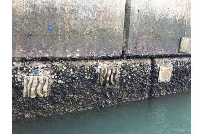 Eco-engineered tiles enhance marine biodiversity on seawalls in Hong Kong and beyond