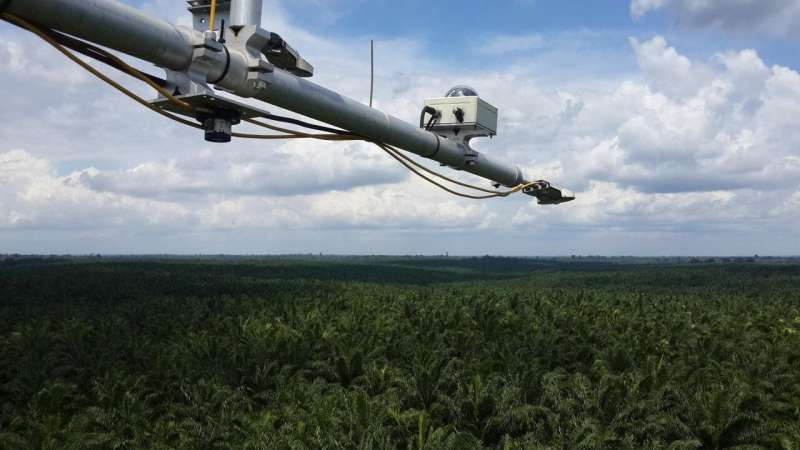Eco-friendly biodiesel from palm oil?