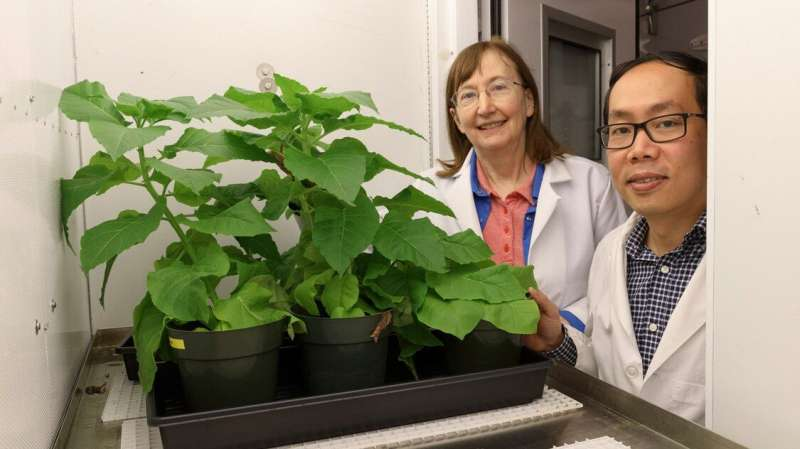 E. coli bacteria offer path to improving photosynthesis