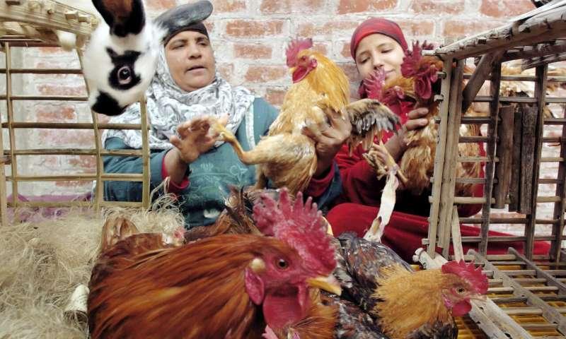 Egypt reports bird flu outbreaks in rural area