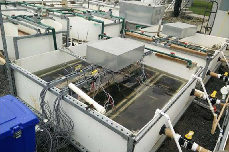 Electron-producing microbes power sustainable wastewater treatment