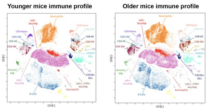 Engineering immunity: Profiling COVID-19 immune responses and developing a vaccine