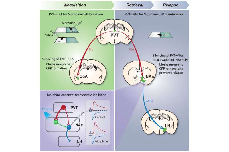 """Erasing"" drug-associated memories may help prevent addiction relapse"