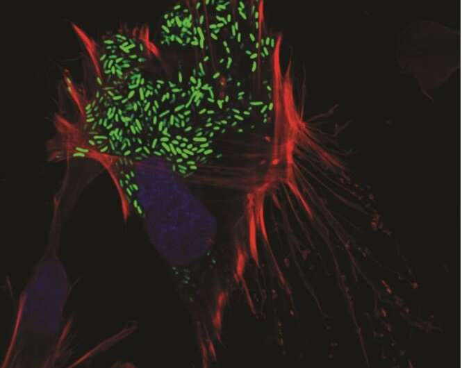 Escape artists: How vibrio bacteria break out of cells