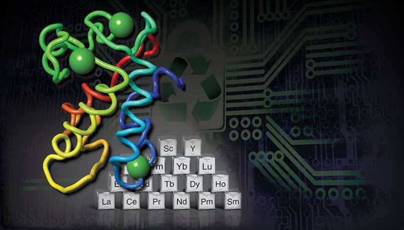 E-waste-eating protein creates rare earth elements