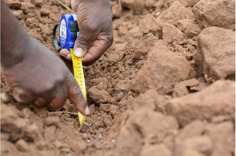 Examine narratives to end policy deadlock, boost agricultural development in Africa, economists say