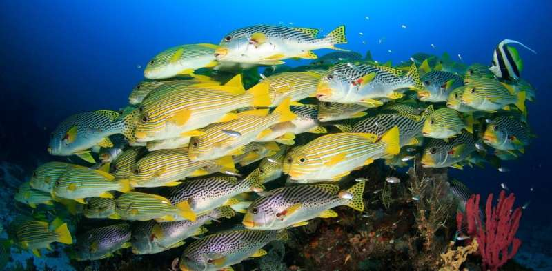 Expanding marine protected areas by 5% could boost fish yields by 20% – but there's a catch