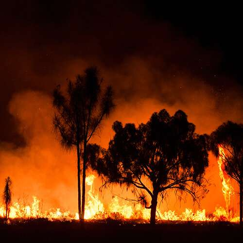 Expert calls for 'fire-line' to future-proof against bushfire disaster