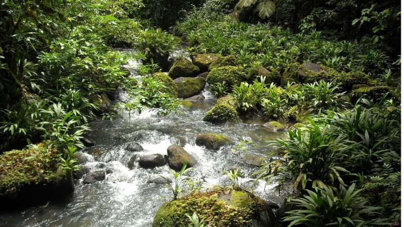 Fertilizer runoff in streams and rivers can have cascading effects, analysis shows