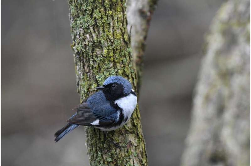 Fifty years of data show new changes in bird migration