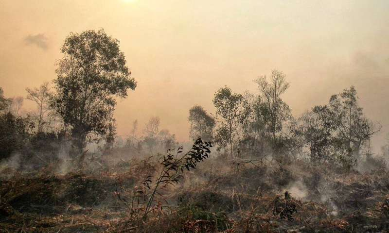 Fire-resistant tropical forest on brink of disappearance -