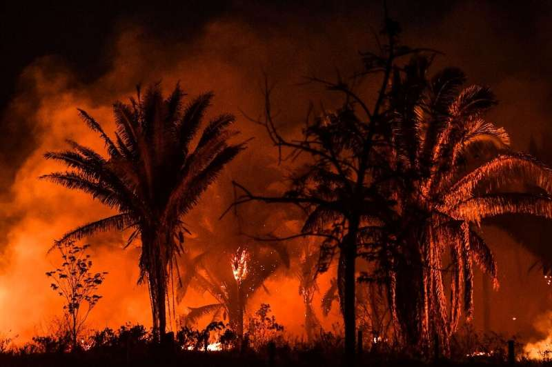 Fires have ravaged swathes of the Amazon this year