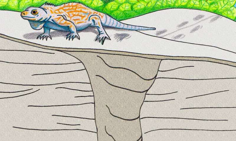 First-known fossil iguana burrow found in the Bahamas
