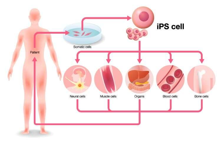 First supercentenarian-derived stem cells created